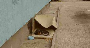 Buzu, il cane che viveva per strada sopra un cuscino (screenshot YouTube)