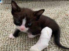 Panda, il gattino nato con una zampina storta: la sua storia (foto Facebook)