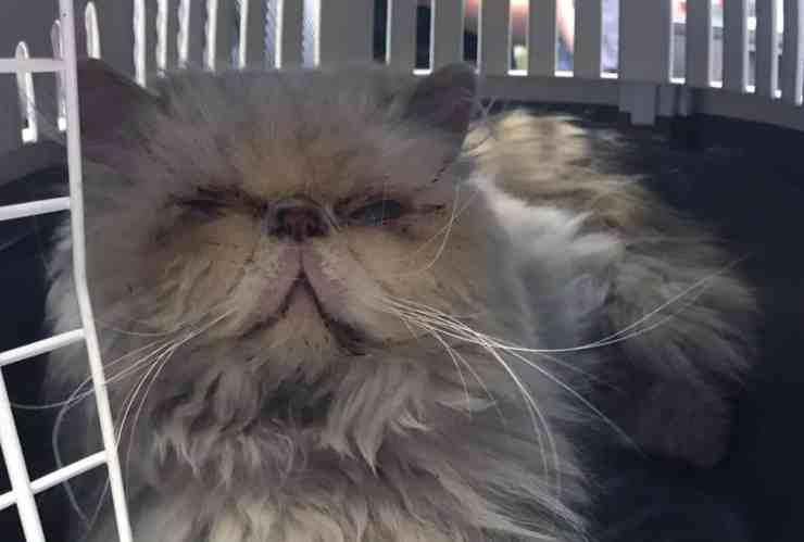 Rose Penelope, la gattina incinta e malata salvata dalla strada (foto Facebook)