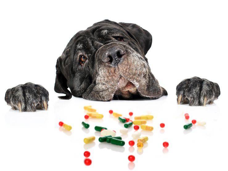 vitamine per cane