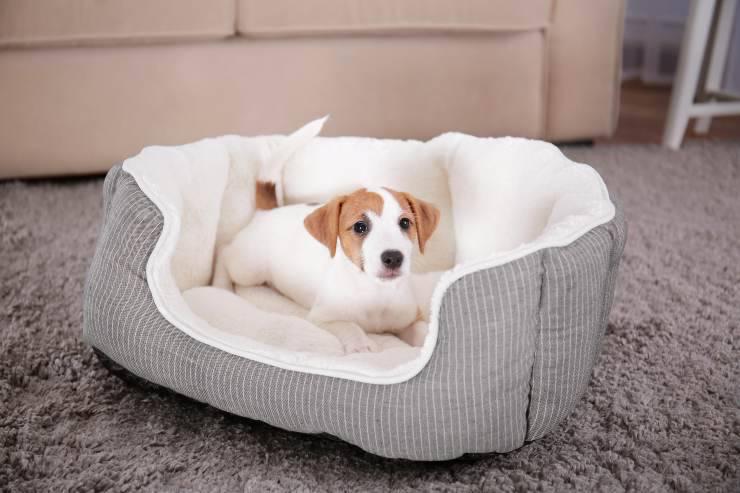 Perché il cane scava nella cuccia prima di dormire