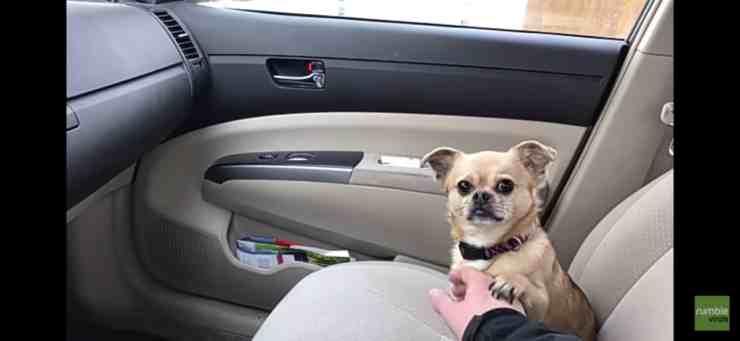 Penny, la cagnolina che non vuole andare dal veterinario (screenshot YouTube)