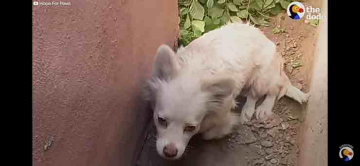 Derby, la dolcissima cagnolina abbandonata nel giorno del trasloco (screenshot YouTube)