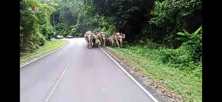 Una famiglia di elefanti attraversa la strada e blocca il traffico (screenshot YouTube)