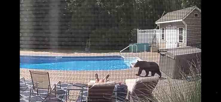 Incontro choc in piscina: un uomo svegliato da un orso (screenshot YouTube)