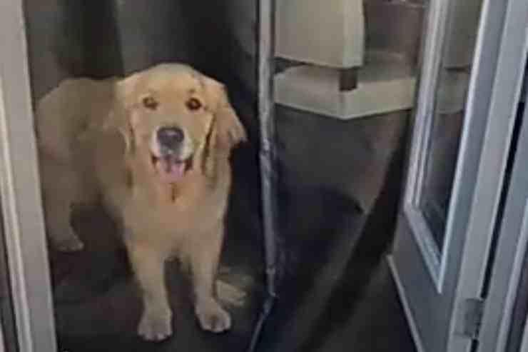 La storia di Sterling, il cane fifone che ha paura della zanzariera (screenshot Facebook)