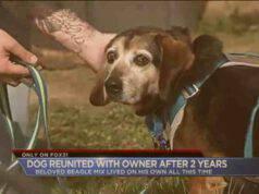 Bosco, il Beagle che dopo due anni ha ritrovato il suo proprietario (screenshot YouTube)