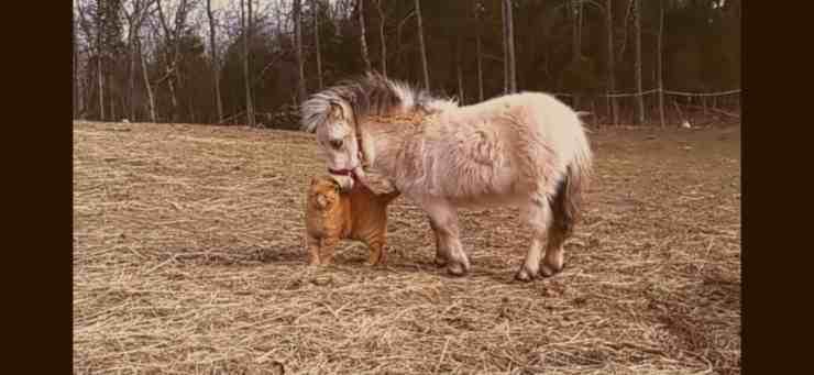 Un gattino ed un pony diventano amici indivisibili - (screenshot YouTube)