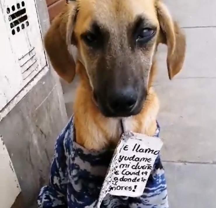 cane cartello appeso collo