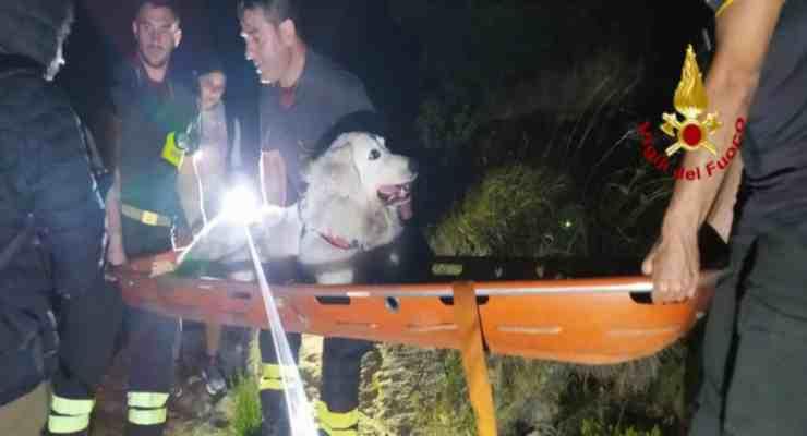 Passeggiata shock in montagna, cane salvato dai vigili del fuoco (foto cloud.vigilfuoco)