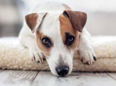 vermi intestinali cane