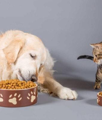 gatto cane ciotole