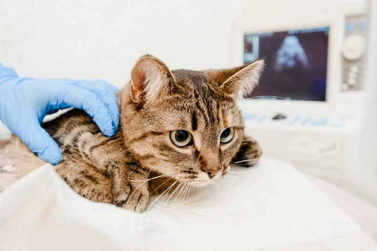 tumore polmoni gatto