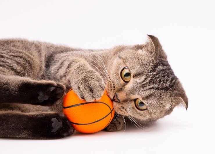 gatto pallina