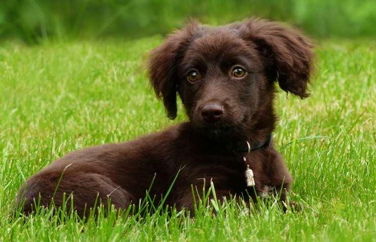 Cucciolo in attesa del padrone (Foto Pixabay)