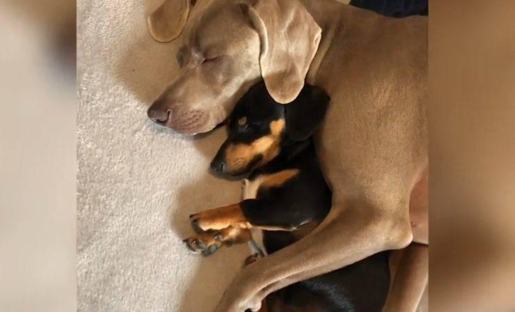 cane supera ansia separazione