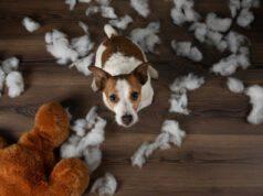attività per un cane distruttivo