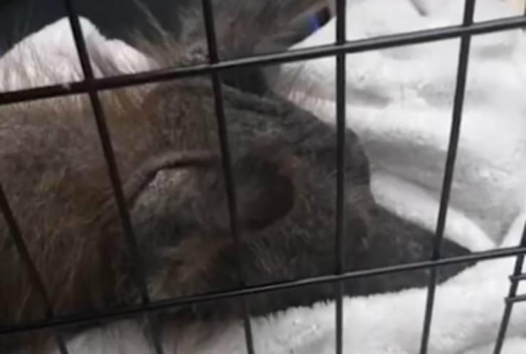 Il cane triste (Foto video)