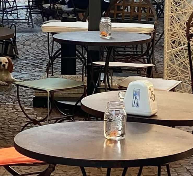Pesci sui tavoli di un bar