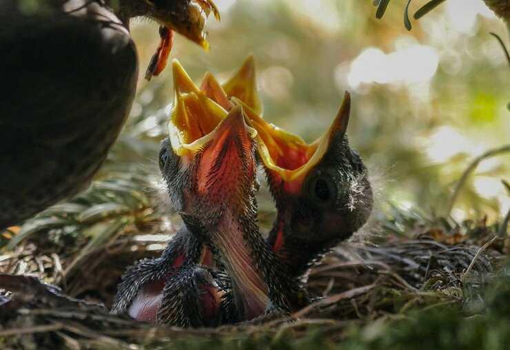 uccellino nido