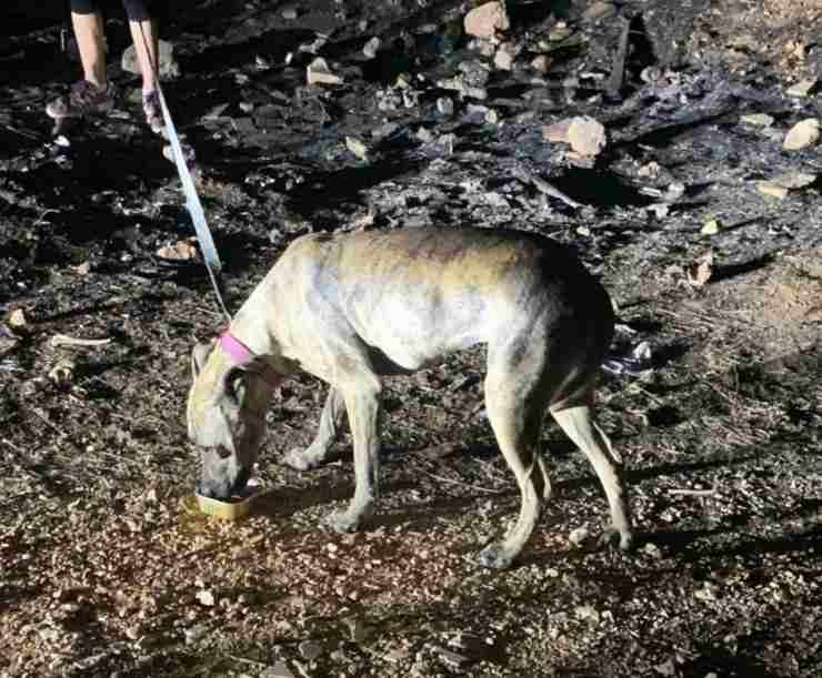 cane legato al palo