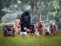 Cani dalle origini italiane