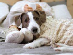 Cappottini per cani senza cucire