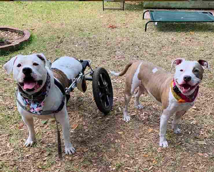 cane riceve carrellino
