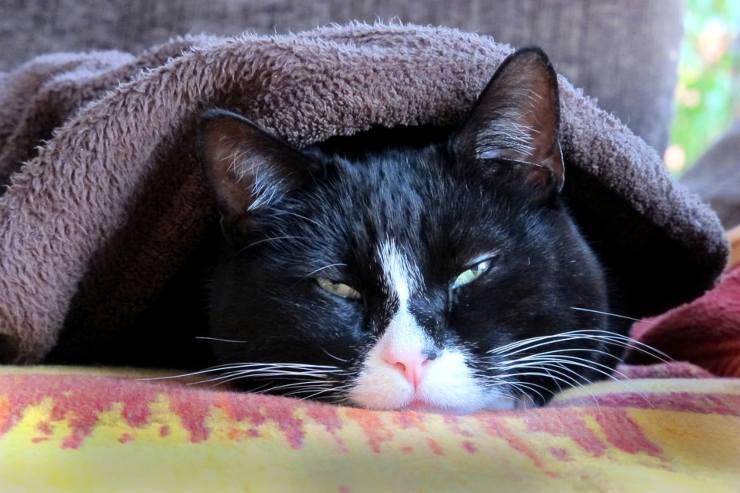 gatto stanco coperta