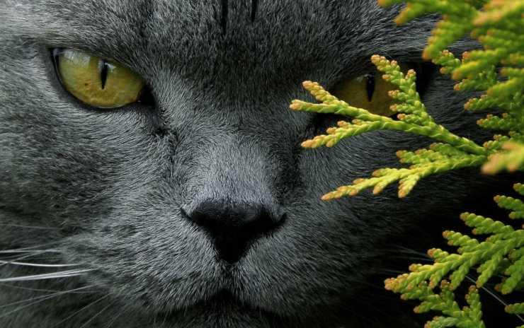 Il gatto si avvicina a chi lo evita