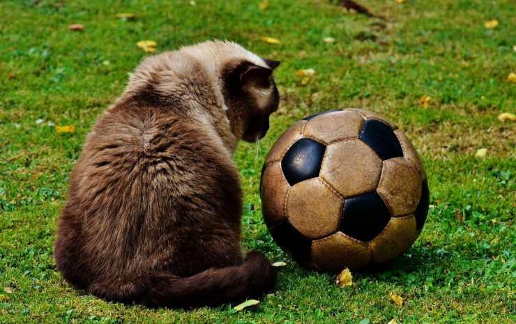 Giocattoli per il gatto