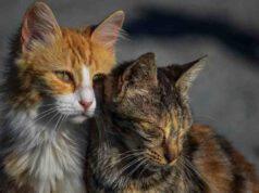 Traffico fraudolento di gatti: arrestato ex allevatore (foto Facebook)