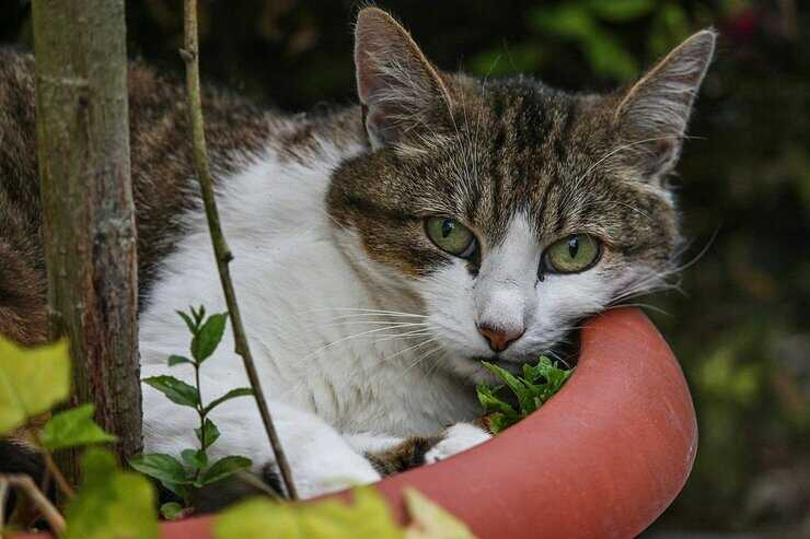 tenere lontano gatto vasi