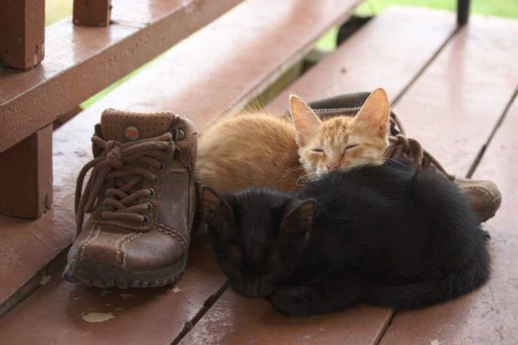 gatto in scarpe