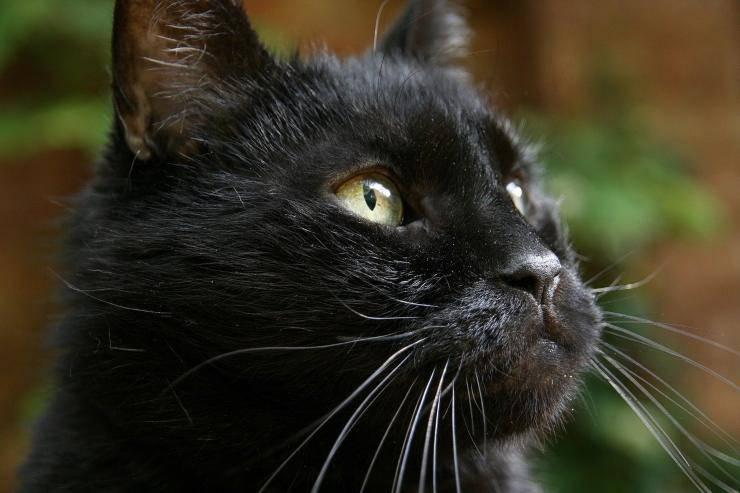 kitty trovato dodici anni