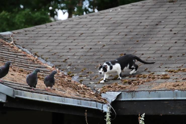 I gatti cacciano gli uccelli