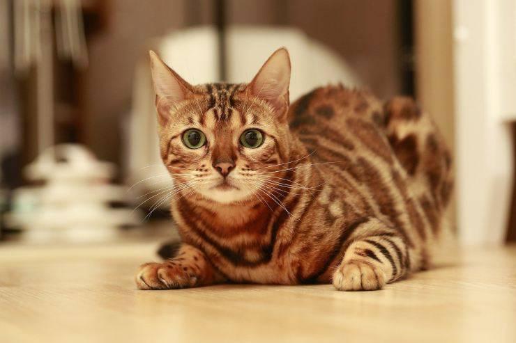 gatto mario sparito