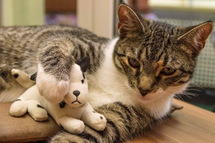 Gatto e paluche