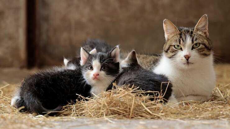 gattini mamma