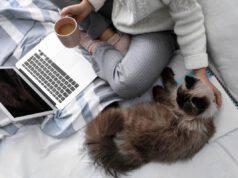 padrone gatto computer