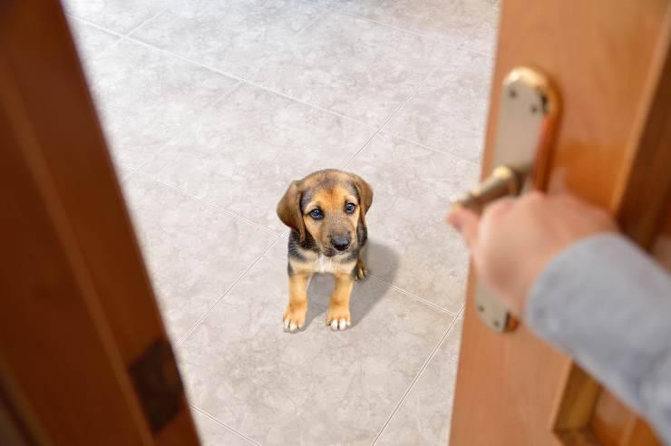 claustrofobia nel cane