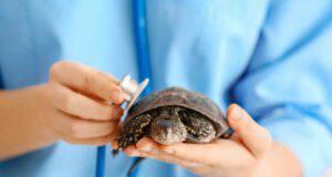 Come capire se la tartaruga è malata