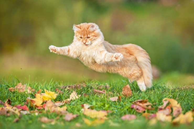 come far divertire il gatto in autunno