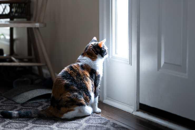 come impedire al gatto di scappare dalla porta