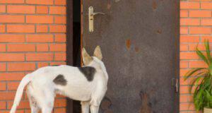 come insegnare al cane a chiudere una porta