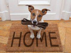 come insegnare al cane a portare il guinzaglio
