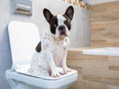 Come insegnare al cane ad usare il wc
