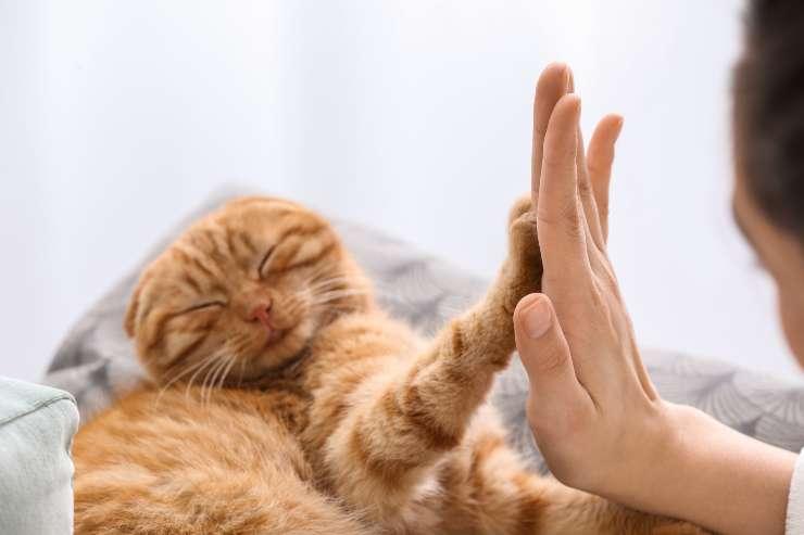 Come insegnare al gatto a dare la zampa