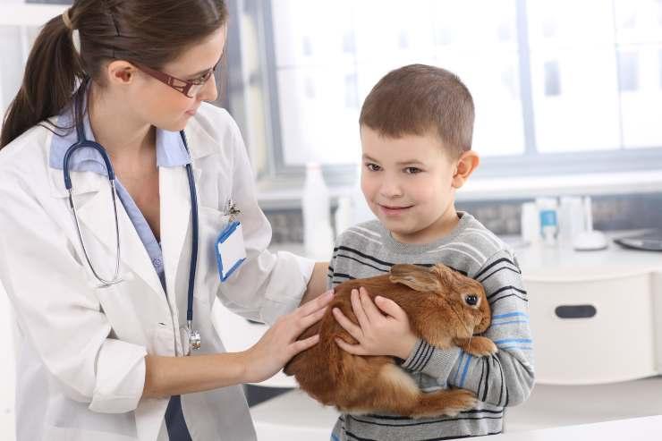 come portare il coniglio dal veterinario