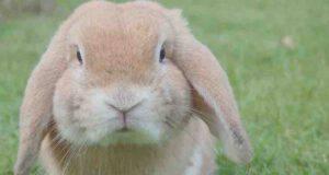conigli e cattivi odori
